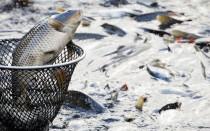 Как называется место где разводят рыбу