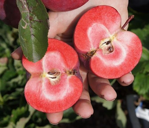 сорта яблок с розовой мякотью